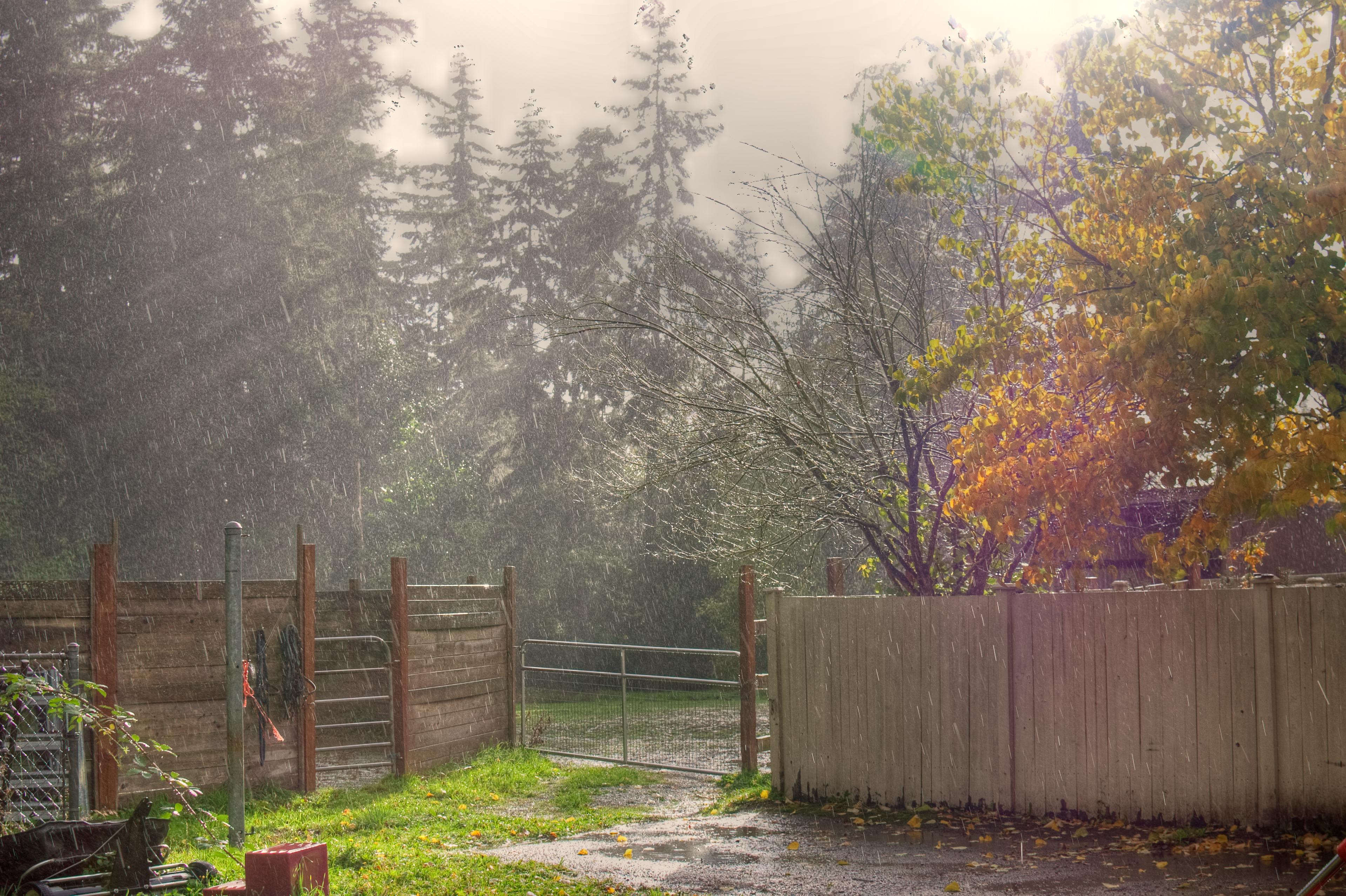 13 Thoughts Everyone Has During a SunShower  Newscult # Sunshower Goes_064641