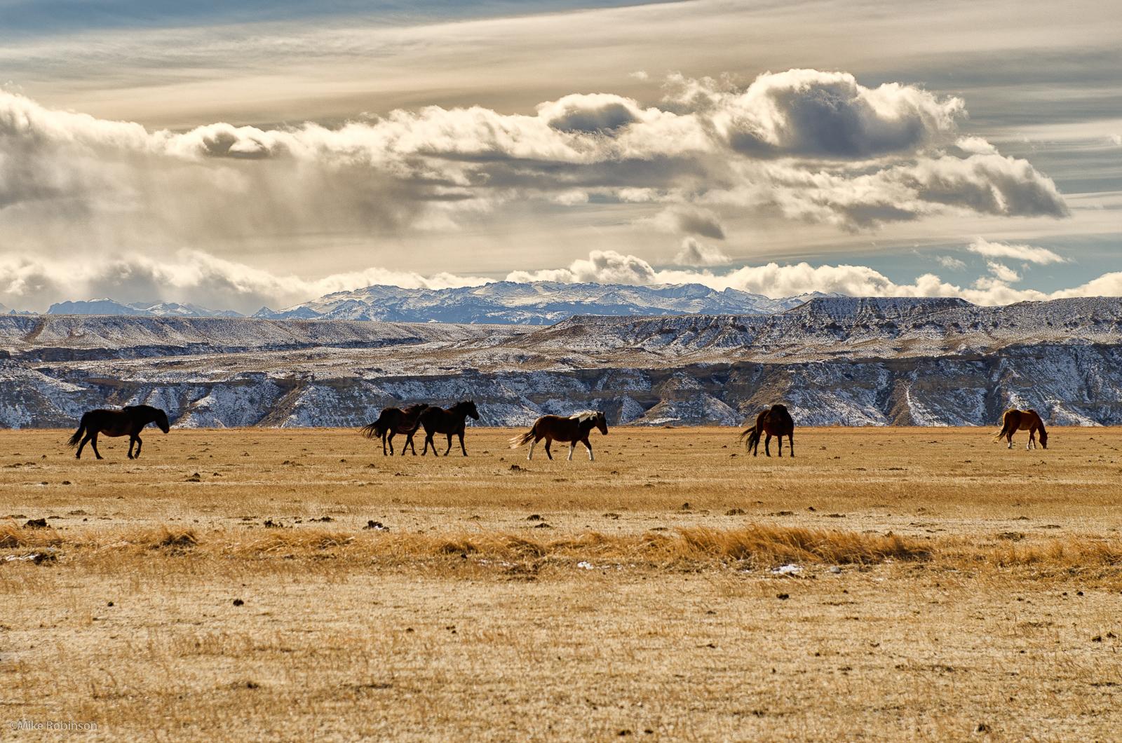 wyoming_horse_country.jpg