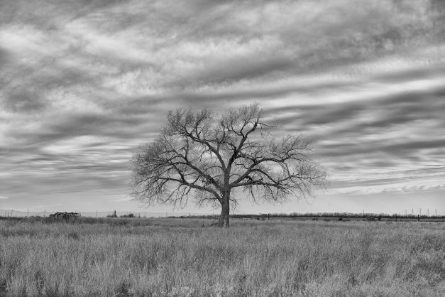 West_Texas_Winter_Tree