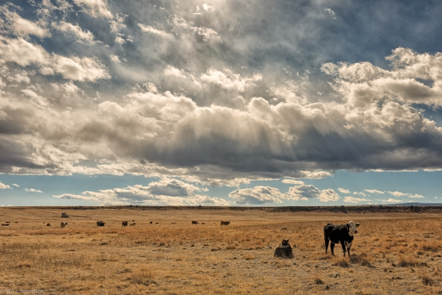 Cows_and_Clouds
