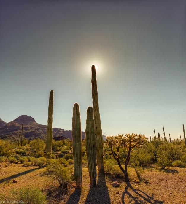 Arizona_Cactus_01