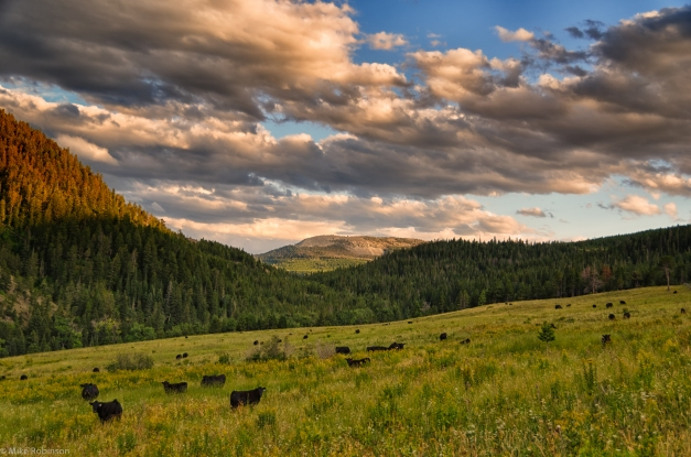 Montana_Pasture_Afternoon