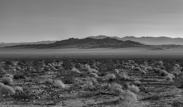 Mojave_Preserve_01_BW