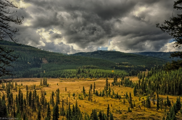 Montana_Forest_View_2