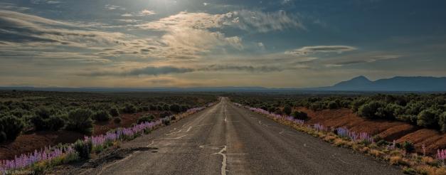 Wildflower_Road