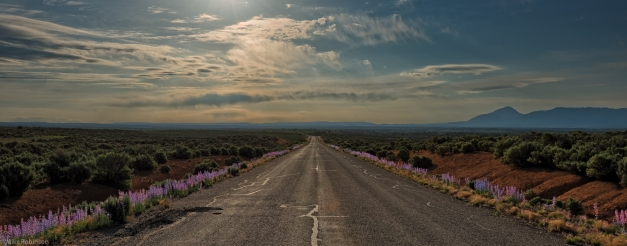 Wildflower_Road