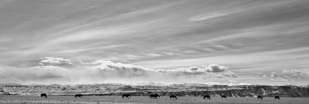 Wyoming_Horse_Country_3