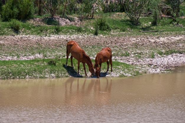 Rio_Grande_Horses_1