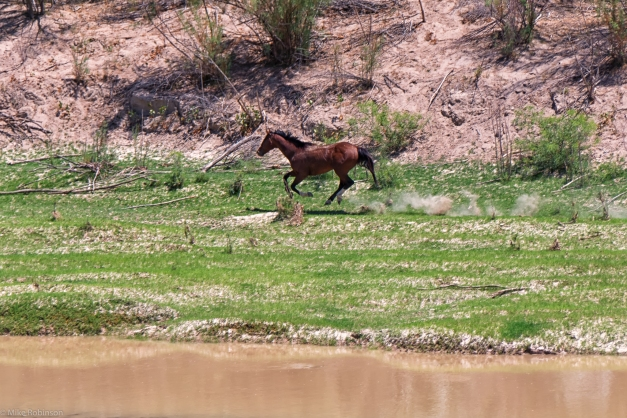 Rio_Grande_Horses_2