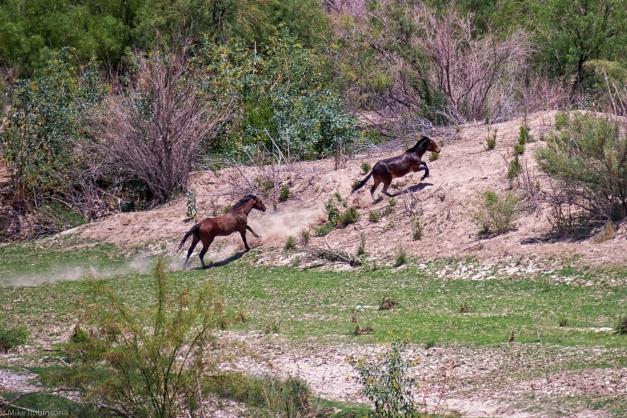 Rio_Grande_Horses_3