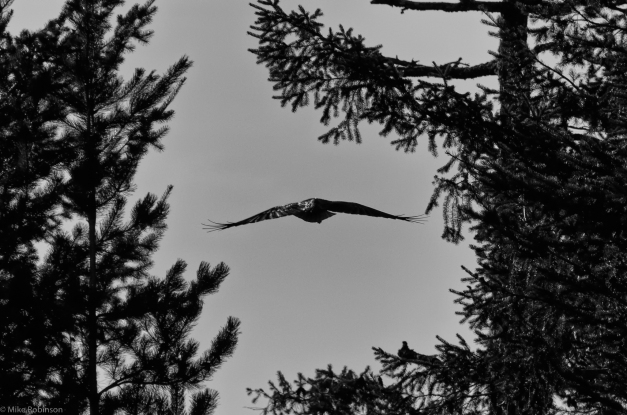 Flying_Through_Trees