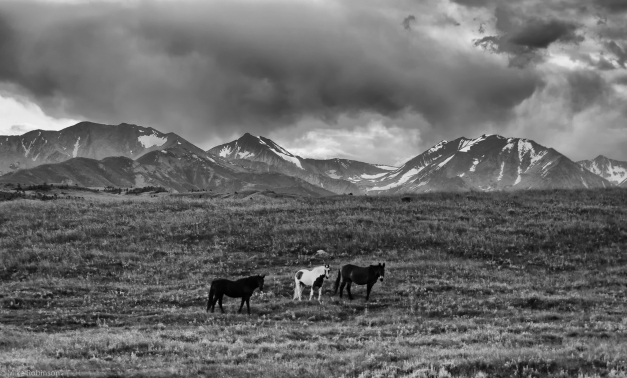 Montana_Horses_and_Hills