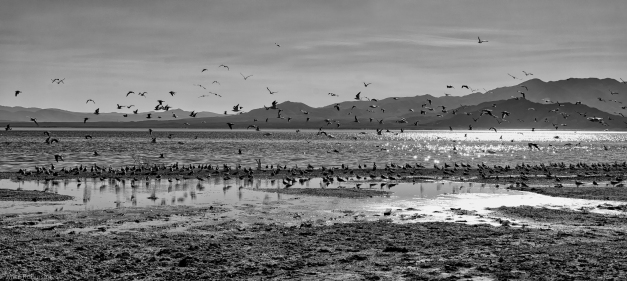 Salton_Sea_Shore_BW