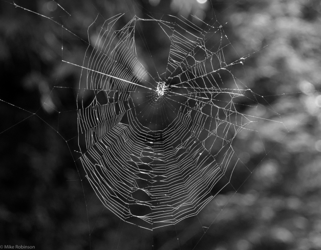 Spider_and_Web_BW