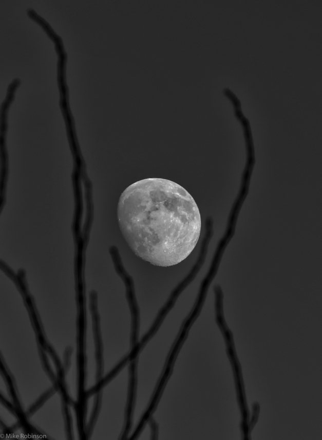 Moon_and_Branches_BW