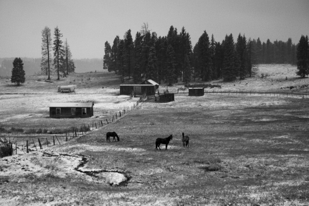NM_Horses_Fall_Snow