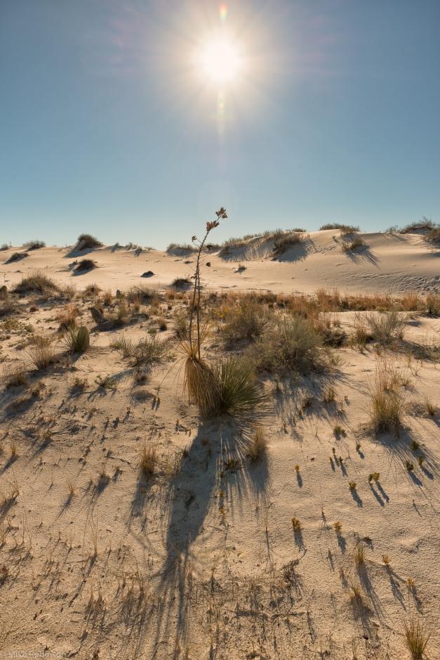 White_Sands_Morning