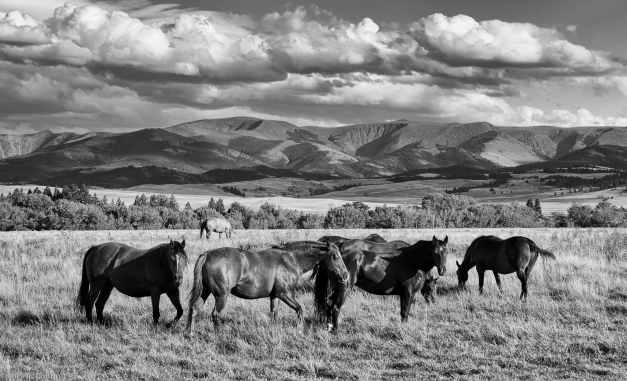 Montana Horse Country 01