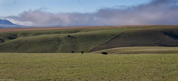 Montana_Countryside_Morning