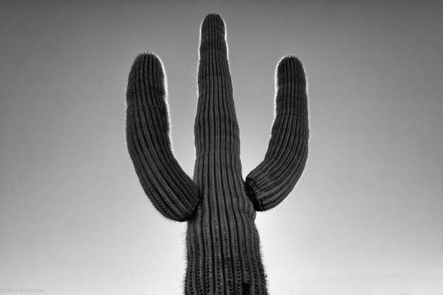 Arizona_Cactus_03_BW