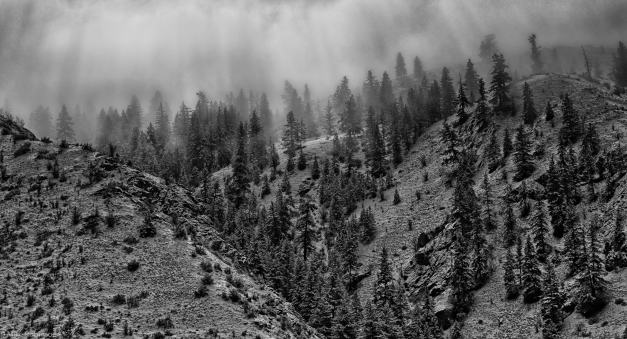 Cascade_Foothills_Misty_Trees_BW