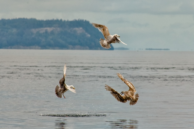 Three_Gulls
