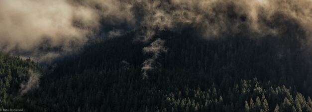 Cloudy_Forest_Hills