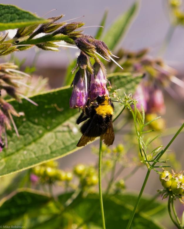 Bee_Feeding