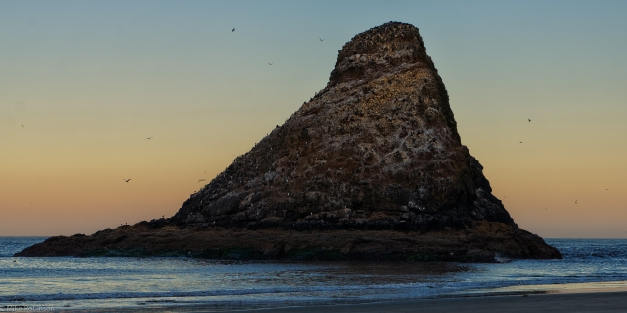 Cape_Cove_Gull_Rock