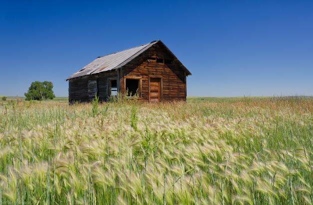 Montana_Summer_Cabin
