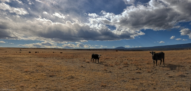 Pano_Cows_and_Clouds_2