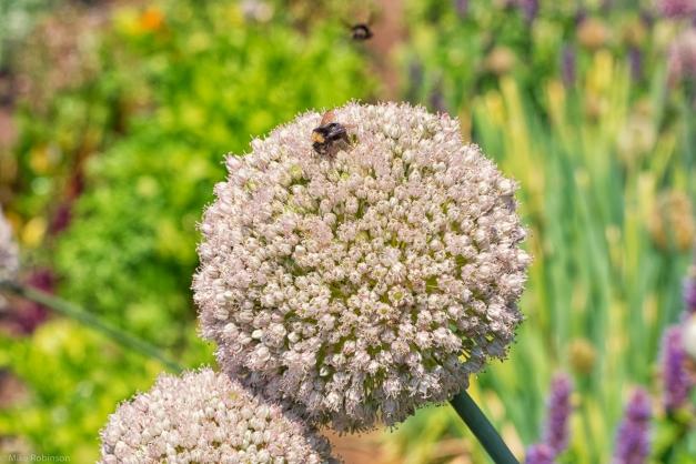 Planet_Flower