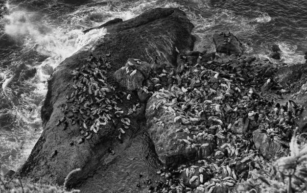 Sea_Lions_on_the_Rocks_2