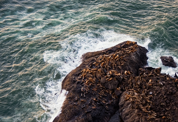 Sea_Lions_on_the_Rocks_3