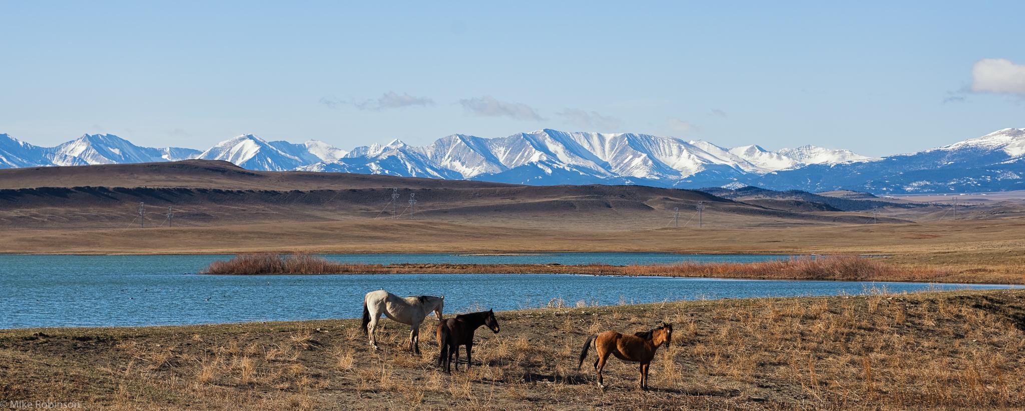 Wild_Horses_at_Lebo_Lake