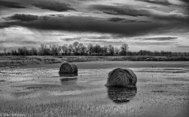 Montana_Flooded_Field_BW