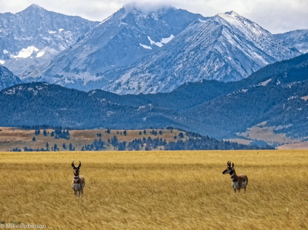 Antelope_and_Mountains