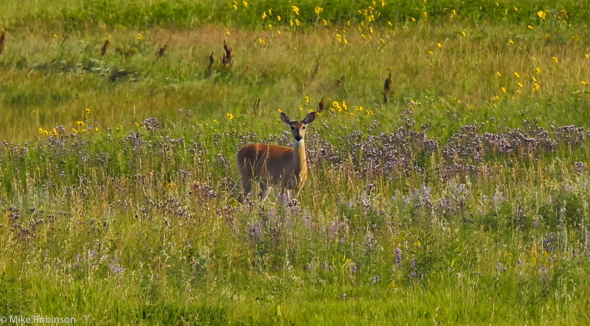 Deer_and_Wildflowers