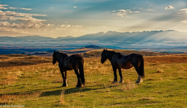 Bridger_Horses_Morning_HDR