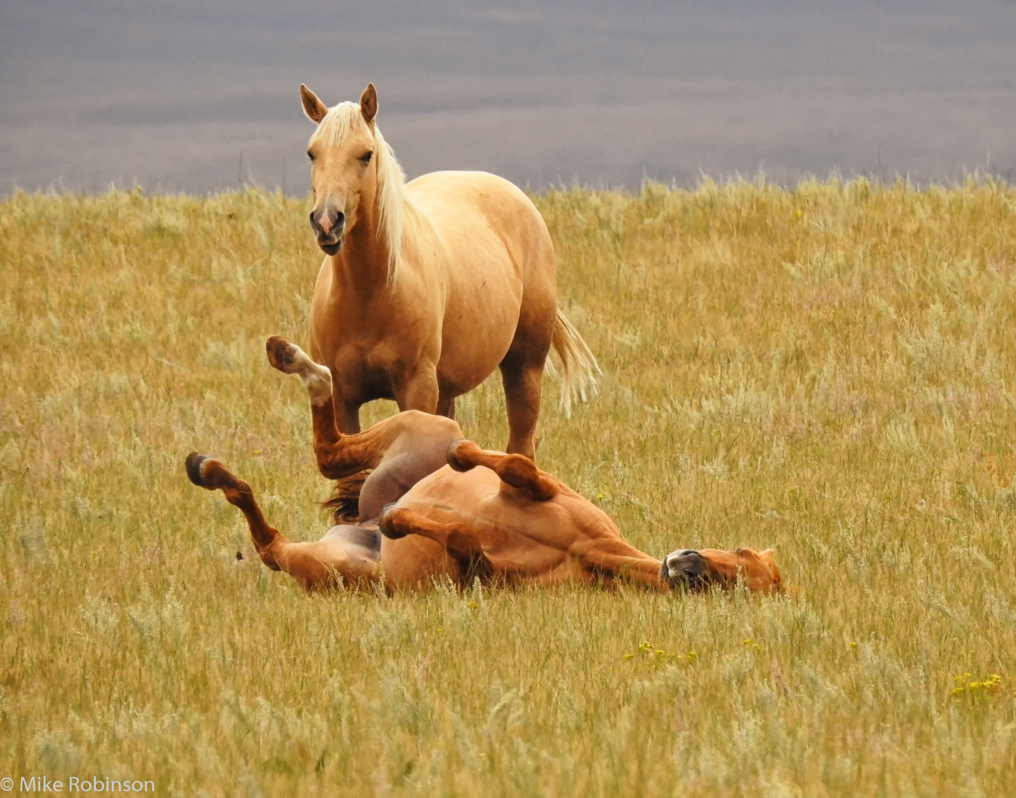 Horses_Chillin