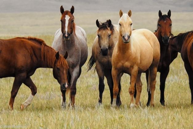 Horses_Staring_Contest