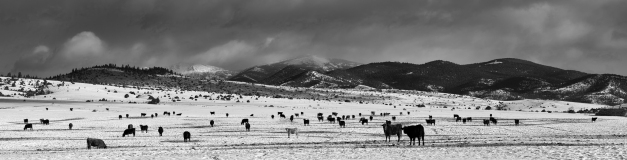 Elkhorn_Winter_Pasture_BW