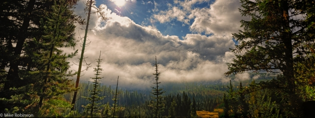 Pano_Montana_Forest_View