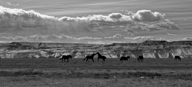 Wild_Horseplay_BW