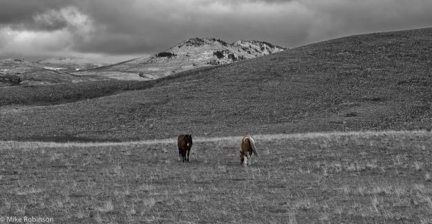 Benchmark_Horses_2