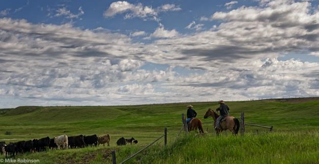 Montana_Cowboys