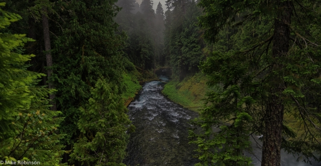 McKenzie_River_Morning_1