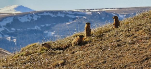 Meet_the_Marmots