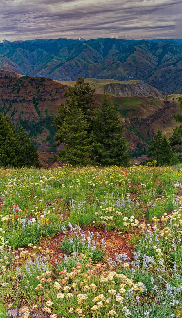 Wildflower_Mountain_Afternoon