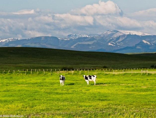 montana-ranch-scene